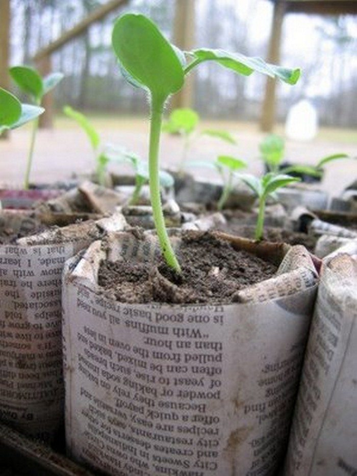 How To Make Biodegradable Newspaper Seedling Pots Craft