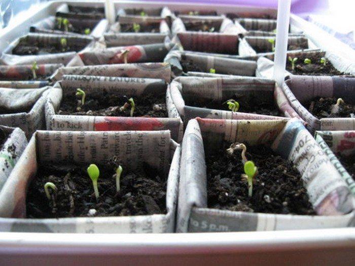 Biodegradable Newspaper Seedling Pot Samples
