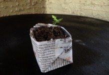 A sustainable and free seedling pot.