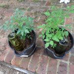 DIY Wine Bottle Waterer