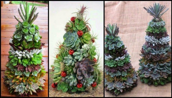 Succulent Christmas Tree Main Image