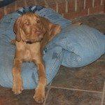 Old Jeans Lap Dog Bed Samples