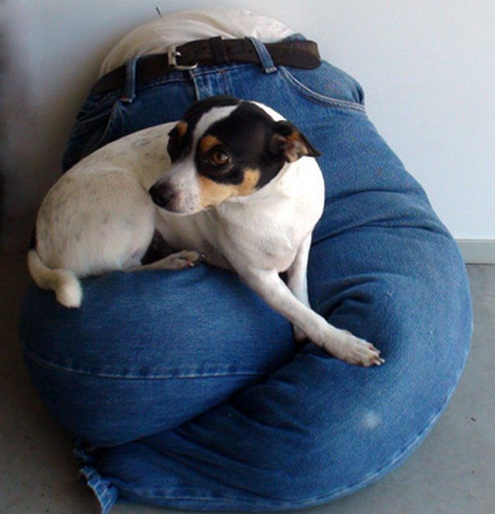 How To Make A Lap Dog Bed Craft Projects For Every Fan