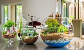 How to make cute terrariums