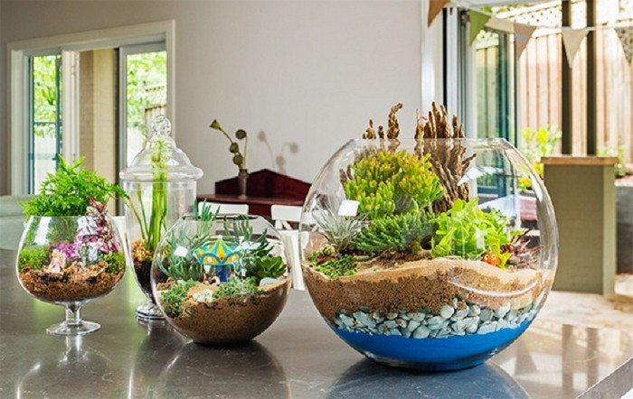 How to make cute terrariums