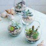 Cute Terrariums