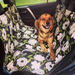 Dog Car Hammock