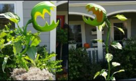 Decorate your garden this Halloween with man-eating monster plants!