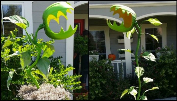 how to grow monster plants