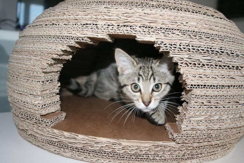 Build your cat a new home with this DIY cardboard igloo project.