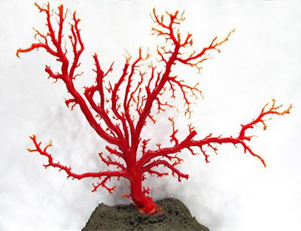 If you can't go to the beach, bring the beach home with this faux coral decor.