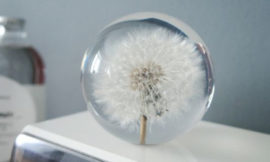 Dandelion Globe