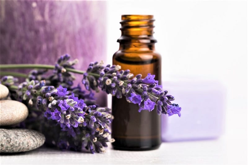 Seventh-century grave robbers who washed with water infused with lavender-essence are said to have miraculously escaped the plague.